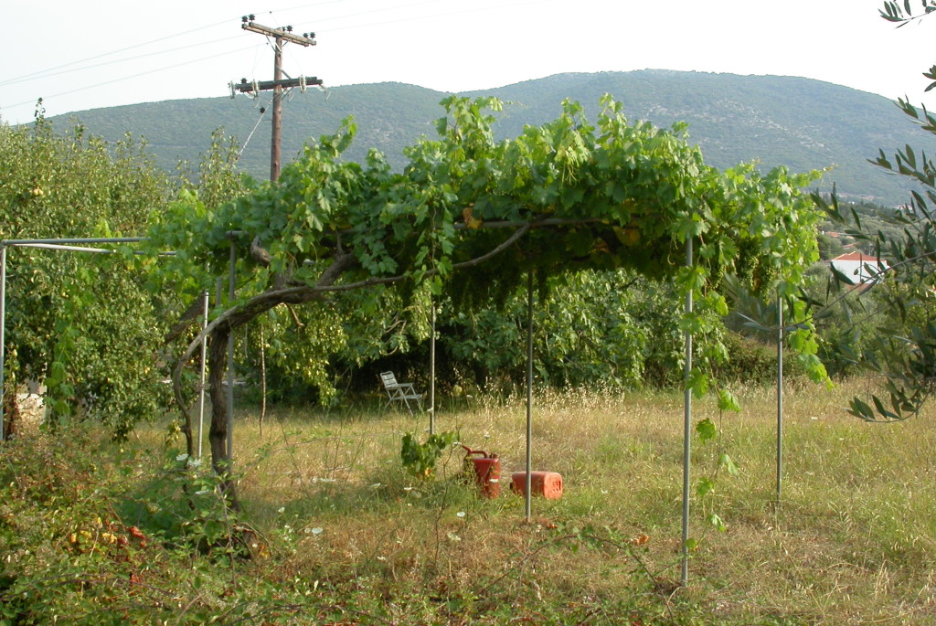 foto lorenzo monasta