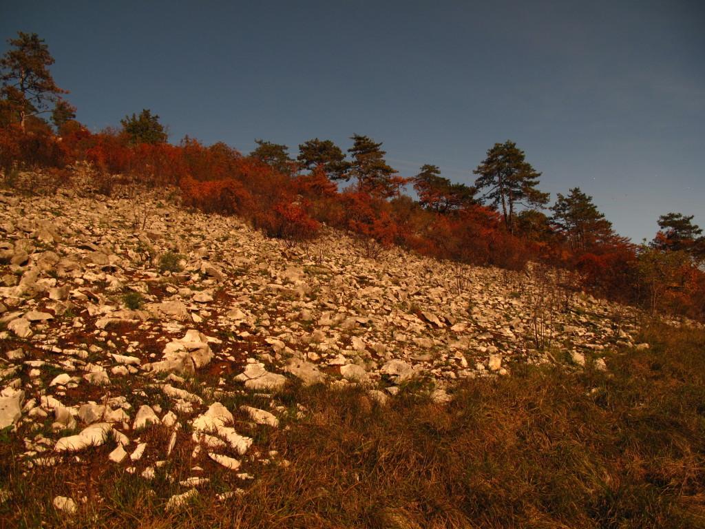 effetti di incendio boschivo con scopertura del suolo