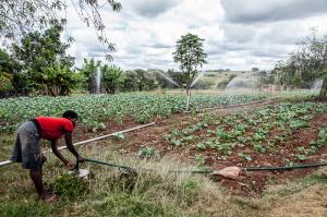 Irrigazione a De Palo