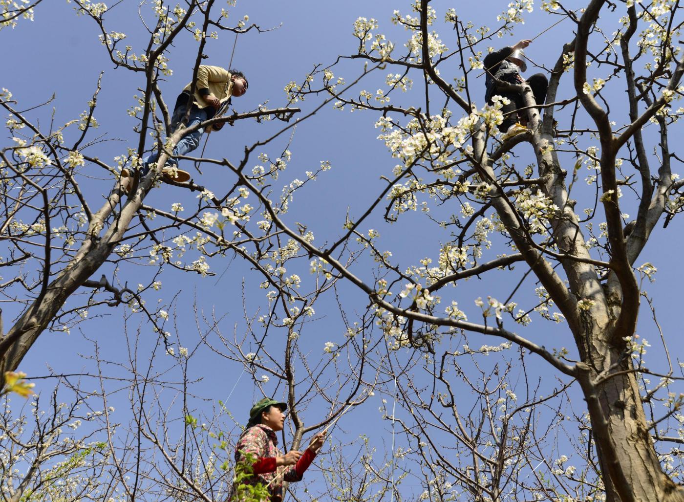 La fioritura in Cina