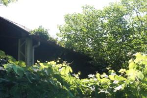 Il tetto del campetto che confina con il cortile dell'abitazione vicina