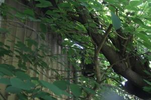 Lo squarcio provocato dal ramo sul tetto